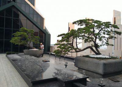 京城一隅-松柏