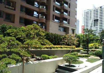 京城一隅-植栽